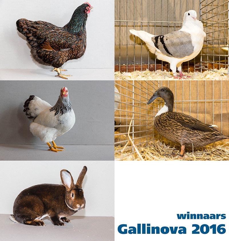 winnaars-2016